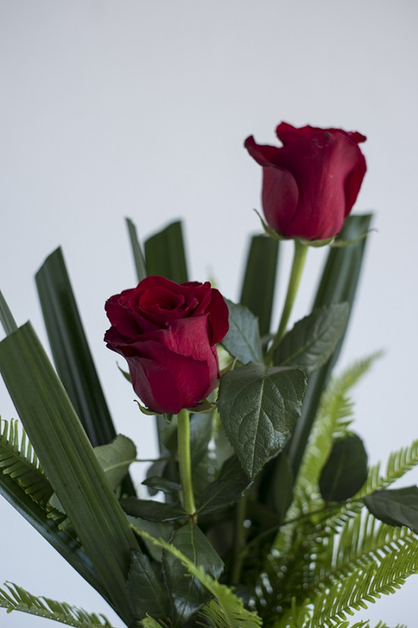 Red Roses in Bud Vase Close Up