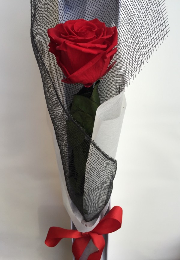 Preserved rose single red close up