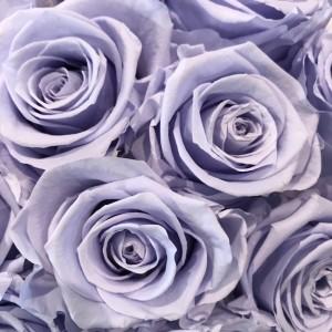 lavender preserved roses