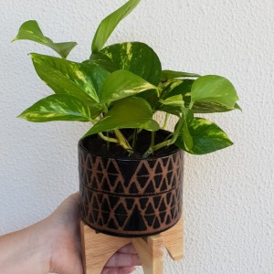 black perez planter