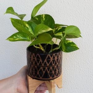 black perez planter