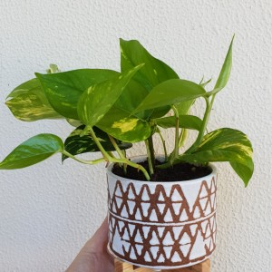 white perez planter